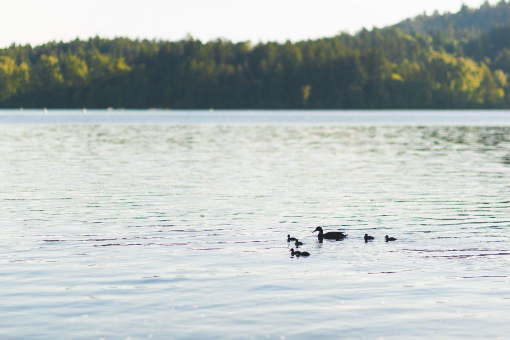 elk lake-5